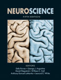 Neuroscience, 5th Edition
